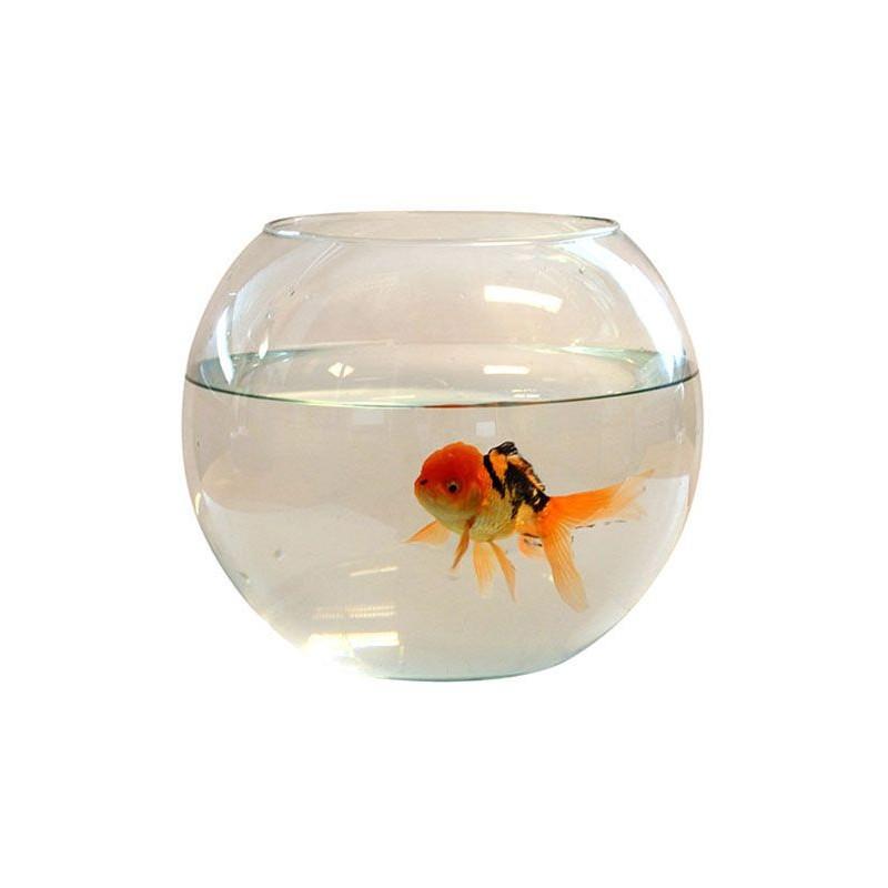 Aquarium boule tournee diam 25cm