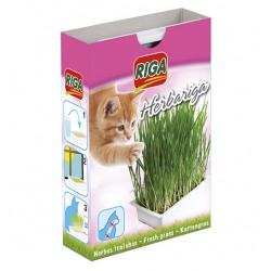 Herbe à chat Herbariga