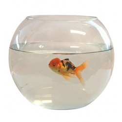 Aquariums pour poissons animalerie en ligne for Aquarium en boule
