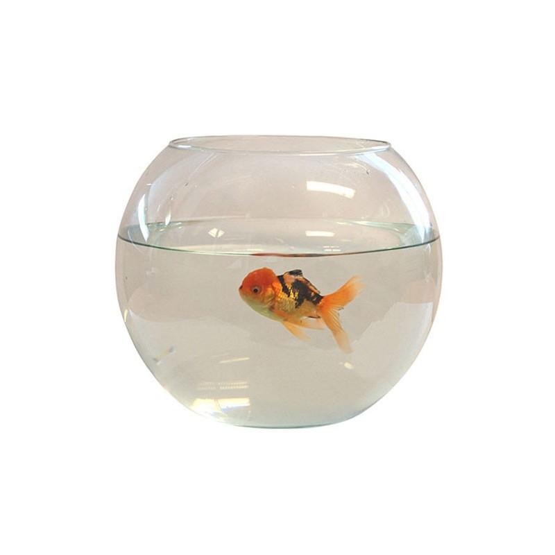 Aquarium boule tournee diam 30cm, soit 12 L